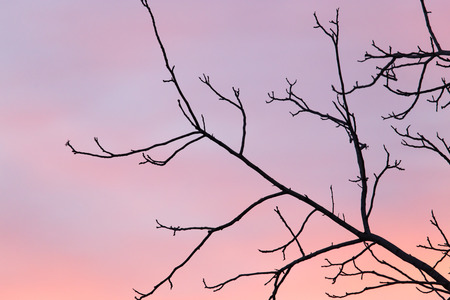 haunt: bare branches of a tree at sunset