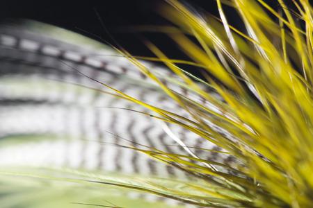 greenish: greenish feather on a black background. close-up Stock Photo