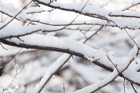 snow on tree branches photo