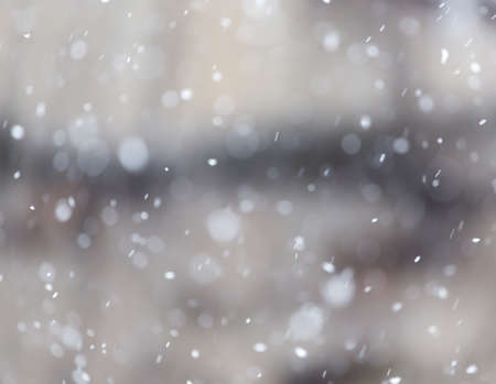 snow falls: snow falls on the nature