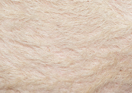 pig skin: Typical pink pig skin, close-up. Stock Photo