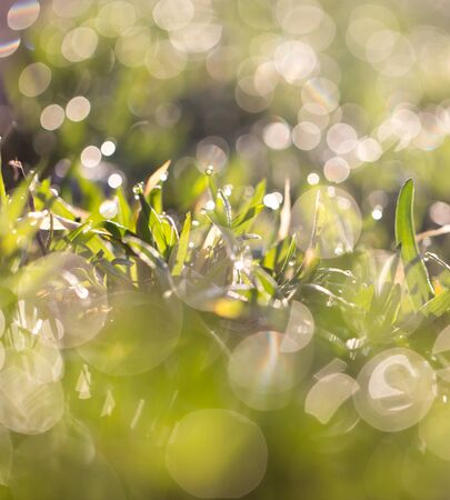 soggy: dew on the grass