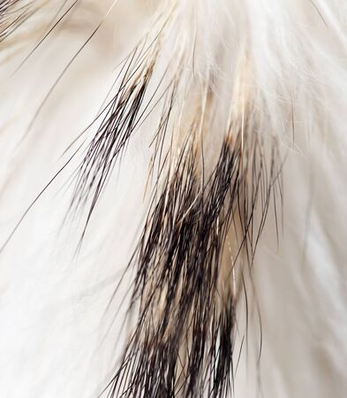 ashy: background made of natural fur