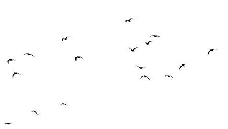 flapping: flock of birds on a white background
