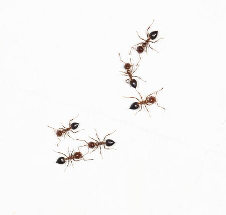 similitude: ants on a white wall. close-up