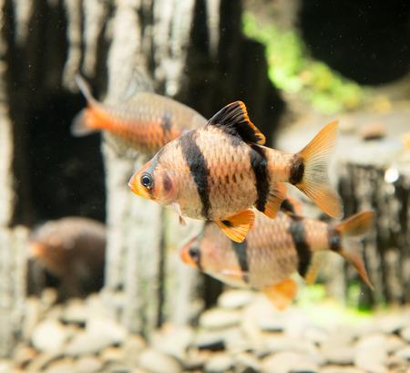 freshwater aquarium plants: fish in an aquarium