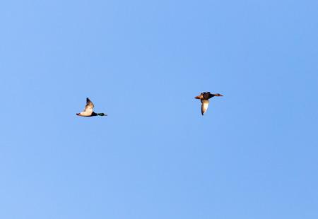 bevy: flock of birds in the sky