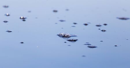 beneath the surface: air bubbles on the surface of the water