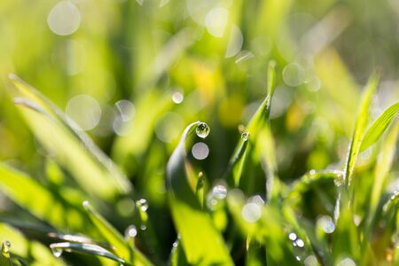 soggy: drops of dew on the grass