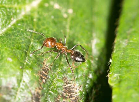 antrey: ant in nature. close-up