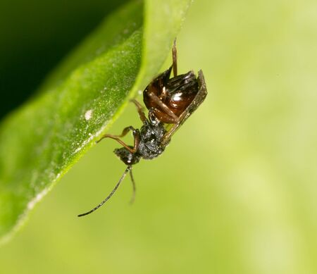 nude outdoors: fly on a green leaf in nature. close-up Stock Photo
