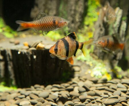 fish in an aquarium photo