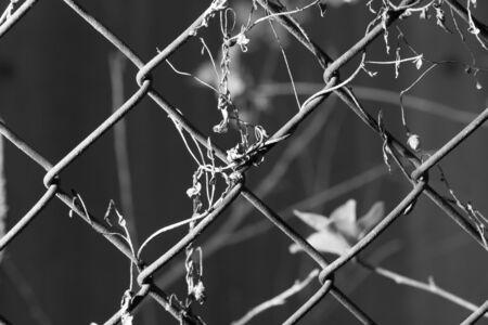 malla metalica: cubiertas de malla metálica Foto de archivo