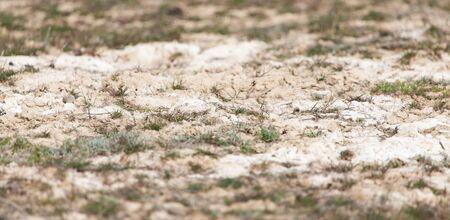 torrid: Salt on the ground in nature Stock Photo