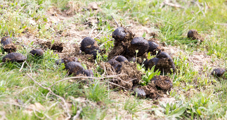 droppings: Horse poo