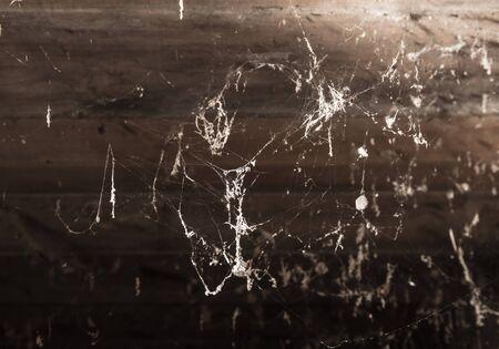 cobwebs: Cobwebs in the basement
