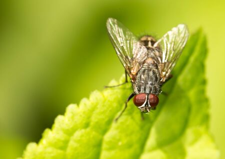wet flies: Fly on a green leaf.