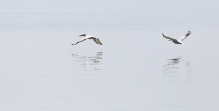 instinct: Birds fly over the surface of the water