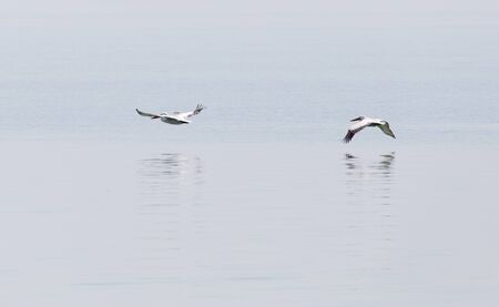 Birds fly over the surface of the water photo
