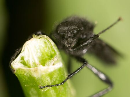 nude outdoors: fly on a green leaf. close
