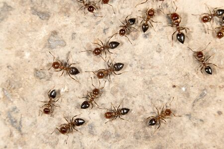 ant: ants on the ground. close-up