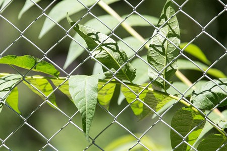 security gap: Plant for the metal fence on nature Stock Photo