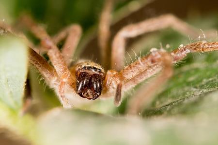 arachnidae: Portrait of a spider.