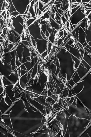 metal mesh: Overgrown with metal mesh Stock Photo