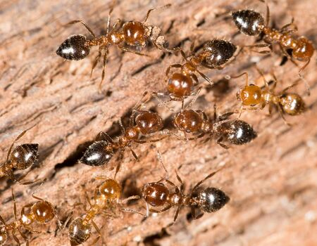 ant: ants on wood. close-up Stock Photo