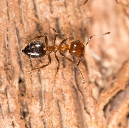 fourmis sur bois. fermer