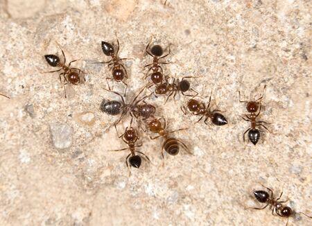 crawly: ants. close