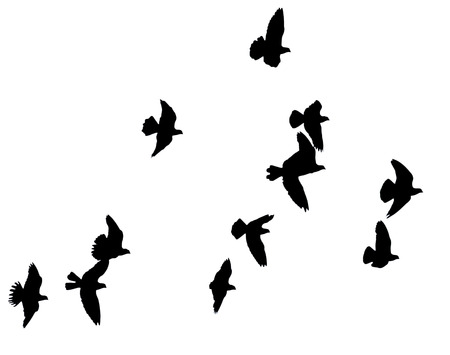 白い背景に鳥の群れのシルエット