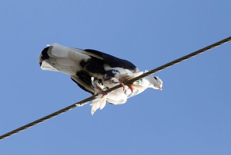 telephone pole: Dove in the wire electricity