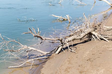unspoilt: Syrdarya river .Kazahstan