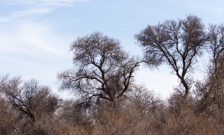 leafless: Leafless tree branches against the blue sky