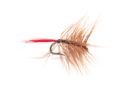 fly fishing: Fly for fishing on white