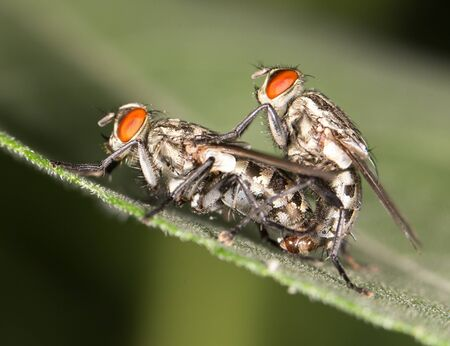coitus: Fly make love.