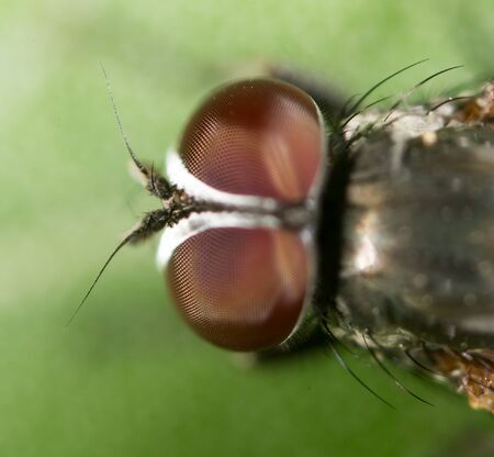 approximation: fly. close