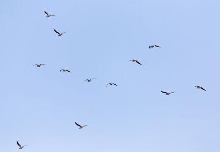 seagull: A flock of seagulls in the sky