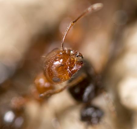 ant on the ground. Super Macro
