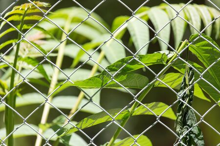 detain: plant for the metal fence on nature