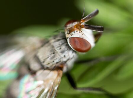 fly in nature. close Stock Photo