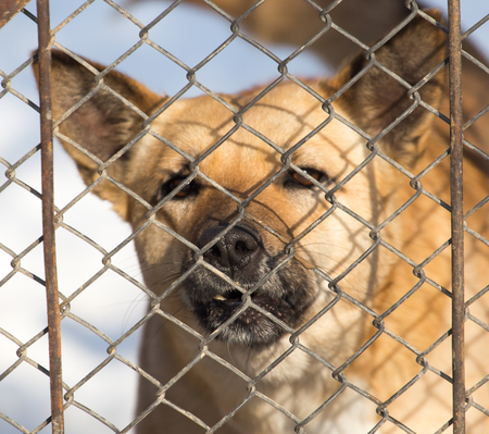 perro furioso: angry dog behind a fence Foto de archivo
