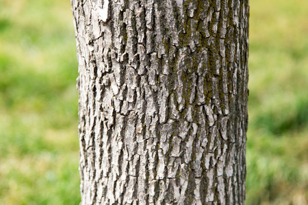 tree detail: trunk of a tree in a park on the nature