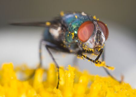 nude outdoors: fly on a flower Stock Photo