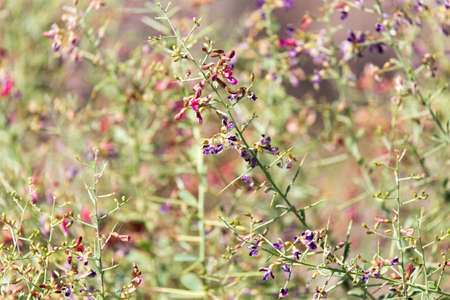 thorny: flowers on thorny plants in nature Stock Photo