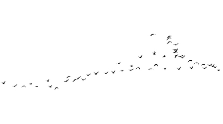 flock: flock of birds on a white background