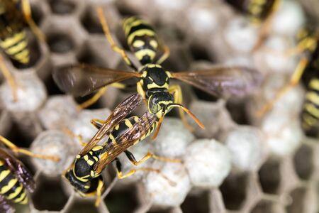 hives: wasp on hives. close