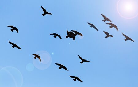 effortless: silhouette of a flock of pigeons on blue sky Stock Photo