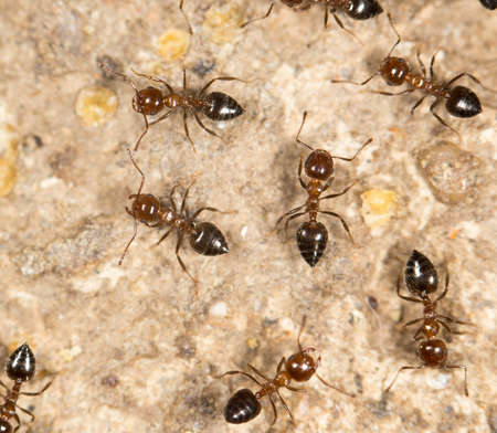 hostile: ants on the ground. close Stock Photo